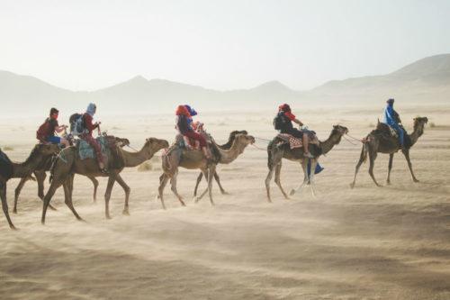 camels-1000-x-666