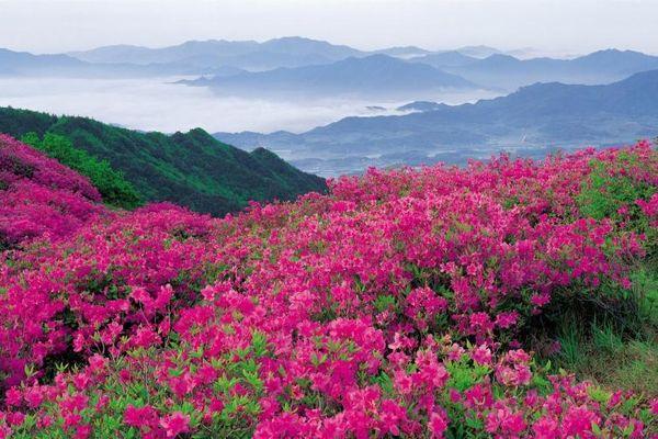 valley-of-flowers-uttarakhand-5